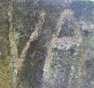 carved in moss